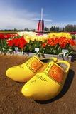 Tulips Field, Wooden Shoe Tulip Farm, Woodburn, Oregon Photographic Print by Craig Tuttle