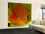 Orange Dafodil Wall Mural – Large by Magda Indigo