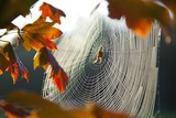 Orb Spider on its Web Photographic Print by Craig Tuttle