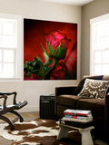 Red on Red Premium Wall Mural by Philippe Sainte-Laudy