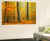 Orton Forest Premium Wall Mural by Philippe Sainte-Laudy