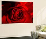Rosa roja Mural por Marco Carmassi