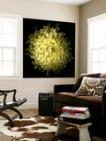 Yellow Chrysanthemum 1 Wall Mural by Magda Indigo