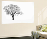 Waiting for Spring Wall Mural by Doug Chinnery