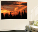 Forest's Edge Wall Mural by Art Wolfe