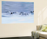 Out for a Run Wall Mural by Art Wolfe