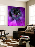 Purple Anemones Wall Mural by Magda Indigo