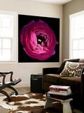 Pink Ranunculus Premium Wall Mural by Magda Indigo