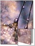 Dancing Seedlings Poster av Ursula Abresch