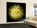 Yellow Chrysanthemum 1 Wall Mural – Large by Magda Indigo