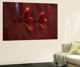 The Parrot 2 Wall Mural by Art Wolfe