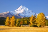 Sunrise over Mt. Hood and Fall Color Trees, Hood River, Oregon Cascades Photographic Print by Craig Tuttle