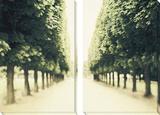 Bäume Poster von Irene Suchocki