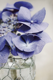 Fresh Hydrangeas II Giclee Print by James Guilliam