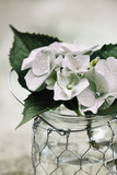 Fresh Hydrangeas I Giclee Print by James Guilliam