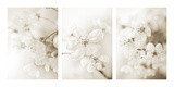 Vernus Triptych (sepia) Reproduction procédé giclée par Eva Charlotte Fransson