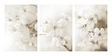 Vernus Triptych (sepia) Giclée-Druck von Eva Charlotte Fransson