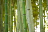 Bamboo and Bokeh I Photographic Print by Erin Berzel