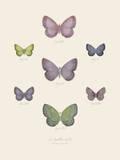 Collection de Papillons II Prints by Maria Mendez