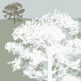 Treeline Sycamore Giclee Print by Sarah Cheyne