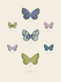 Collection de Papillons I Posters by Maria Mendez