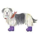 Shaggy Dog II Prints by Kate Mawdsley