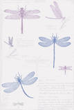 Dragonfly Sketchbook Poster by Maria Mendez
