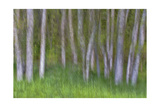 Alder Forest II Photographic Print by Kathy Mahan