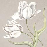 Soft Tulip II Giclee Print by Ellen Hudson