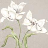 Soft Tulip I Giclee Print by Ellen Hudson