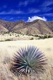 Desert Grasslands II Photographic Print by Douglas Taylor