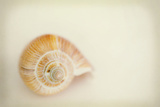 She Sells Seashells IV Photographic Print by Roberta Murray