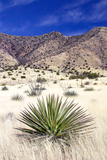 Desert Grasslands I Photographic Print by Douglas Taylor