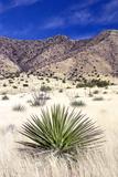 Desert Grasslands I Photographic Print by Douglas Taylor