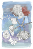Sea Shell I Print by Katrien Soeffers