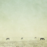 Colder Horses Photographic Print by Roberta Murray