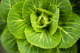 Cabbage Detail Photographic Print by Erin Berzel
