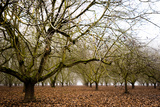 Hazel Tree Grove III Photographic Print by Erin Berzel