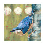 Life Nuthatch Photographic Print by Molly Reeves