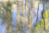 Tree Reflections I Photographic Print by Kathy Mahan