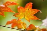 Feuilles d'automneIII Papier Photo par Erin Berzel
