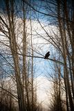 Hawk Silhouette Prints by Erin Berzel