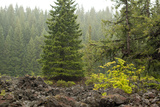 Willamette Nat'l Forest V Photographic Print by Erin Berzel