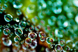 Spider Web Dew II Photographic Print by Erin Berzel