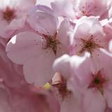 Sunny Blossoms II Prints by Rita Crane