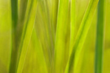 Grass II Photographic Print by JoAnn T. Arduini