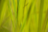 Grass I Photographic Print by JoAnn T. Arduini
