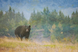 Mountain Bear Prints by Roberta Murray