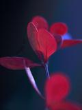 Dancing Blue and Red II Art by Rita Crane