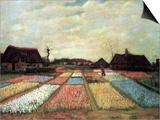 Bulb Fields Prints by Vincent van Gogh